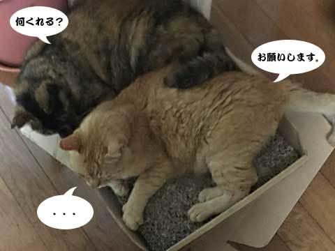 2017_08_09_3.jpg