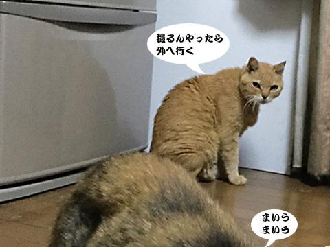 2017_09_04_1.jpg