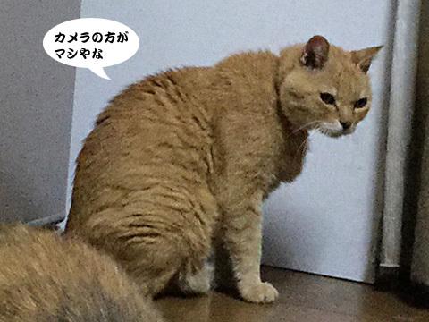 2017_09_04_2.jpg