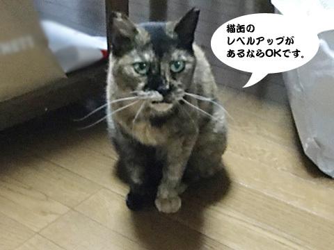 2017_09_04_4.jpg