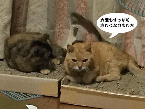 2017_09_06_1.jpg