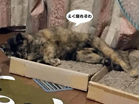 2017_09_06_4.jpg