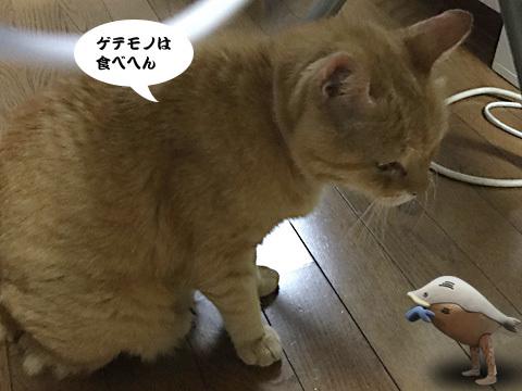 2017_09_08_3.jpg