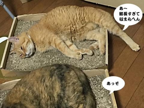 2017_09_18_3.jpg