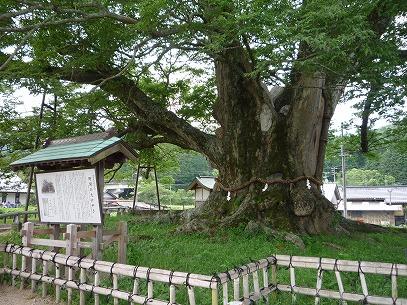 nomakeyaki