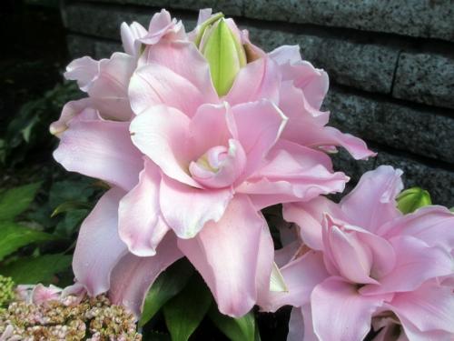 八重咲きオリエンタルリリー