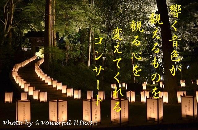 あかりのこみち コンサート (19)