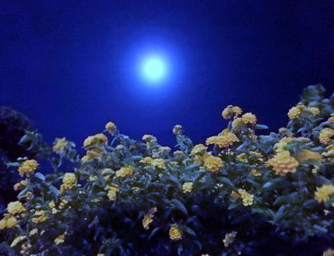 2017/10/05 ランタナと月