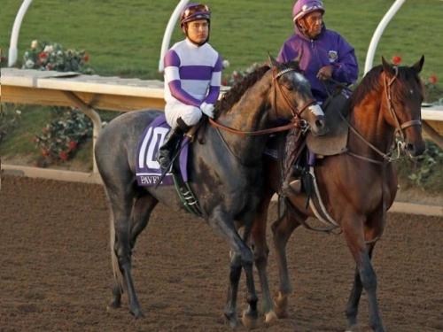 【チャンピオンズC】に米G1馬のパヴェル(Pavel)が出走へ。外国馬の出走は3年ぶり、G1馬は10年ぶり