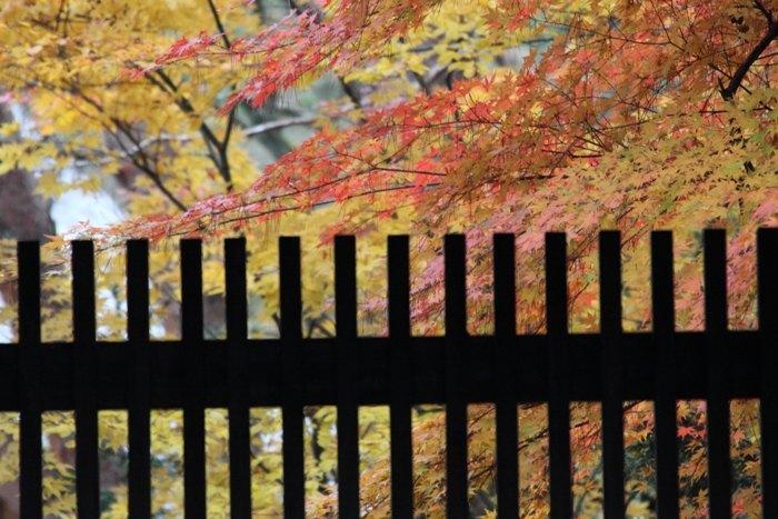 2010_11_14_004.jpg