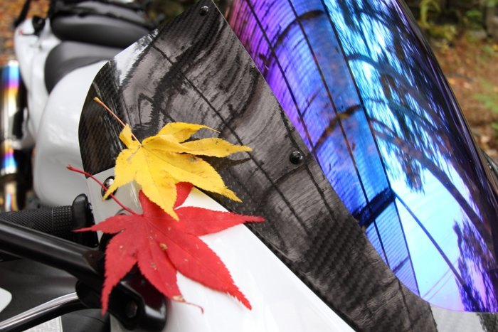 2010_11_14_011.jpg