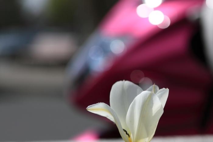2011_04_15_004.jpg