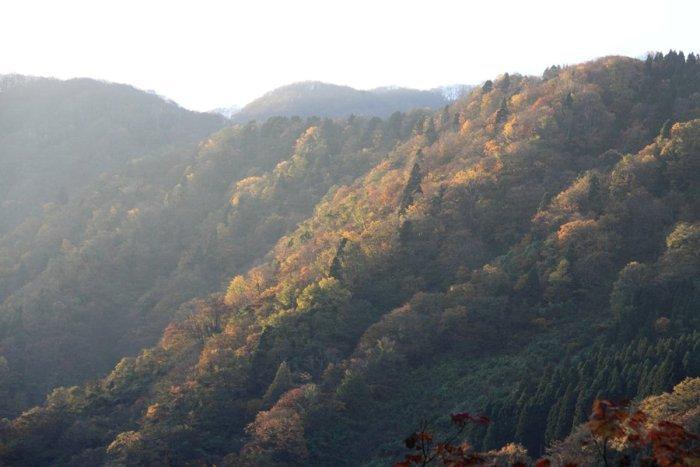 2011_11_04_001.jpg