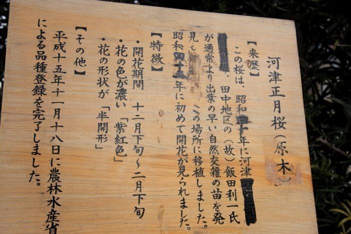 2012_02_26_013.jpg