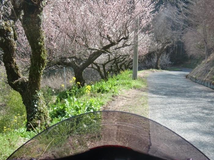 2012_03_26_015.jpg