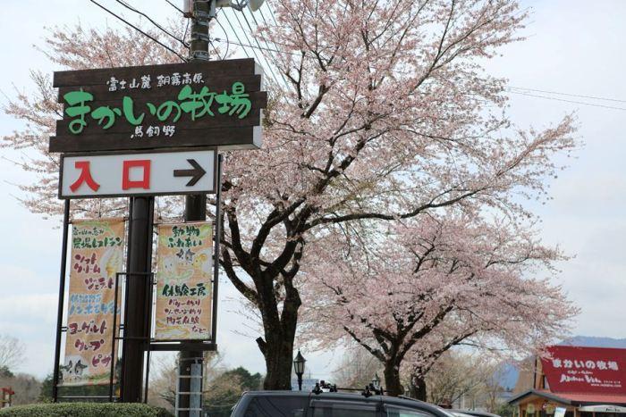 2012_04_15_022.jpg