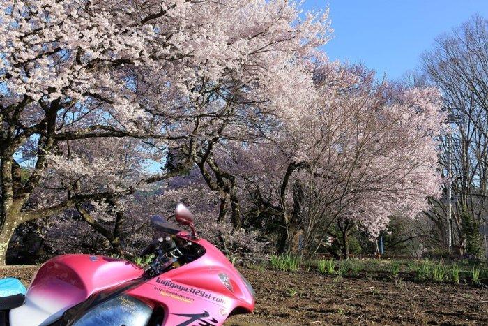 2012_04_24_004.jpg