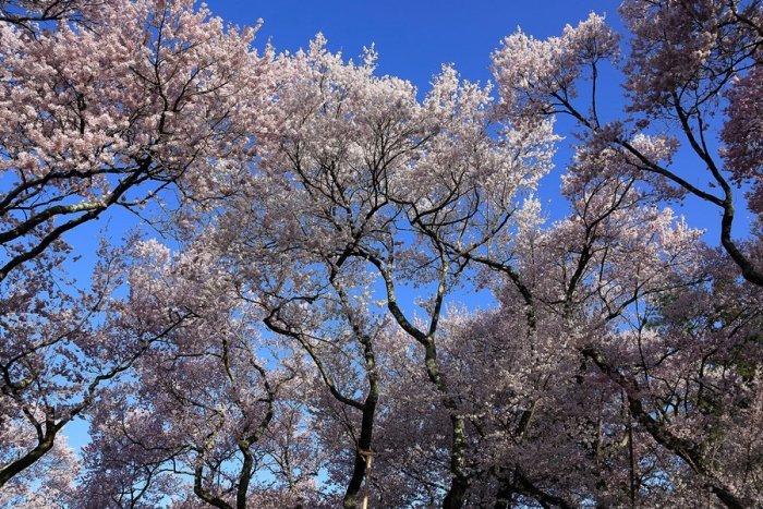2012_04_24_006.jpg