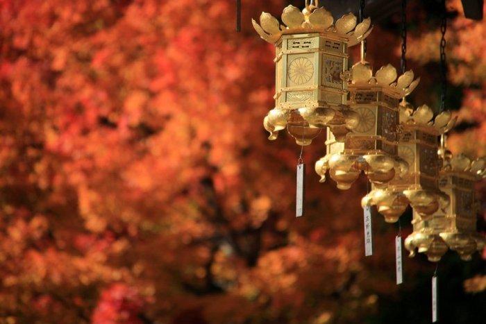 2012_11_12_010.jpg