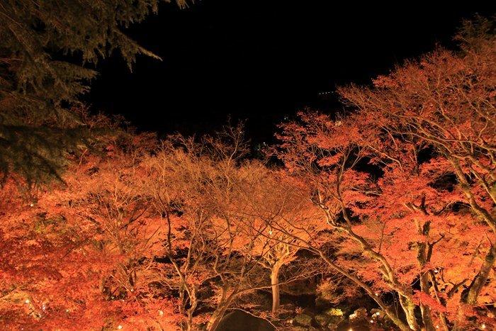 2012_12_10_007.jpg