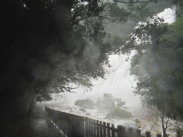 増水の大川の滝