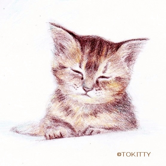 20171204clndrcatsml.jpg