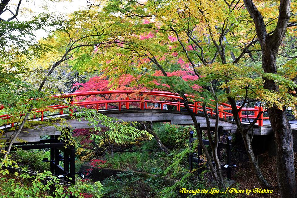 河鹿橋と紅葉56D1