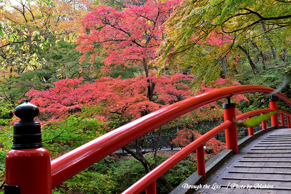 河鹿橋と紅葉56D2