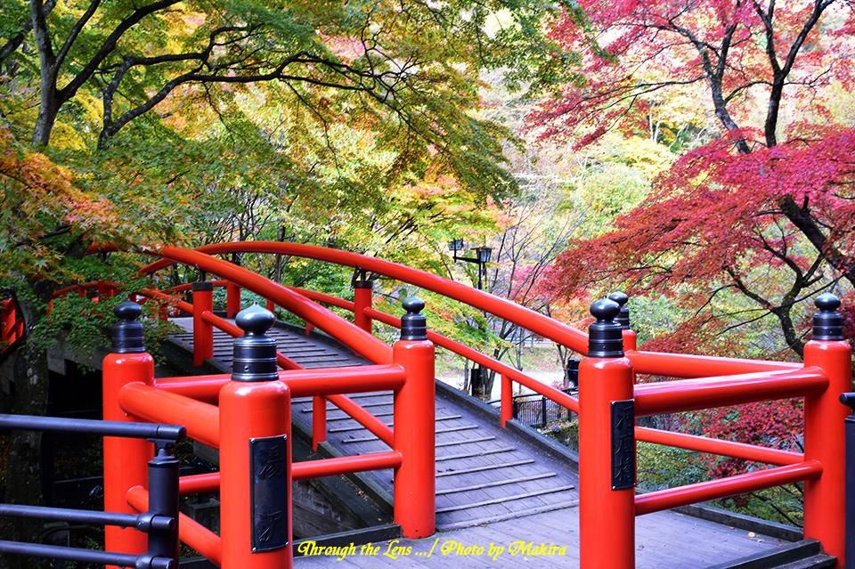 河鹿橋と紅葉56D6