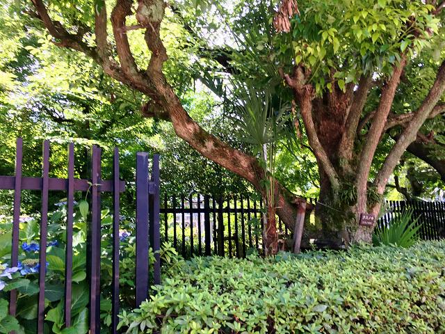 緑深い東京の夏@2017年7月5日 by占いとか魔術とか所蔵画像