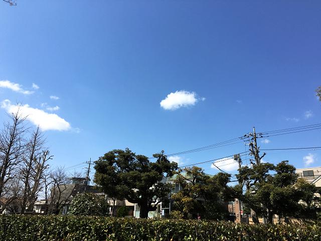 昨日のあり得ない大雨から一夜明け絶好調の秋晴れの東京1 by占いとか魔術とか所蔵画像