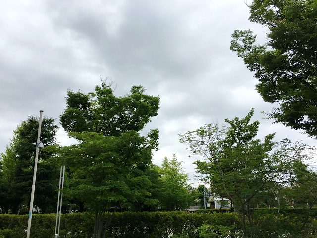 4日連続雨の東京2 by占いとか魔術とか所蔵画像