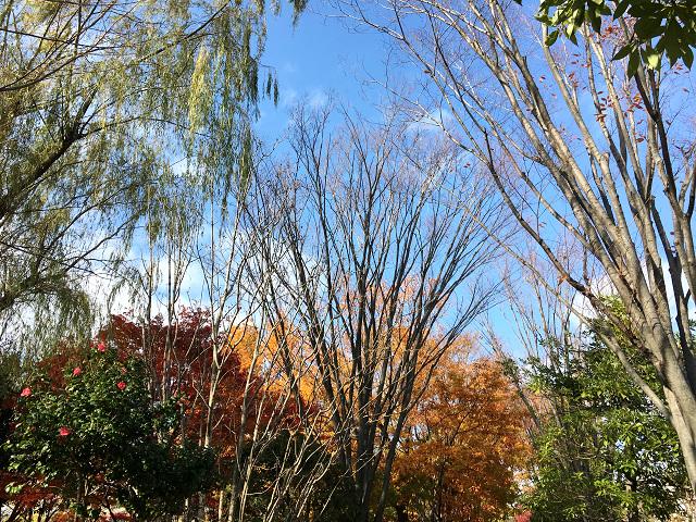 比較的暖かい日が続く11月末の東京1 by占いとか魔術とか所蔵画像
