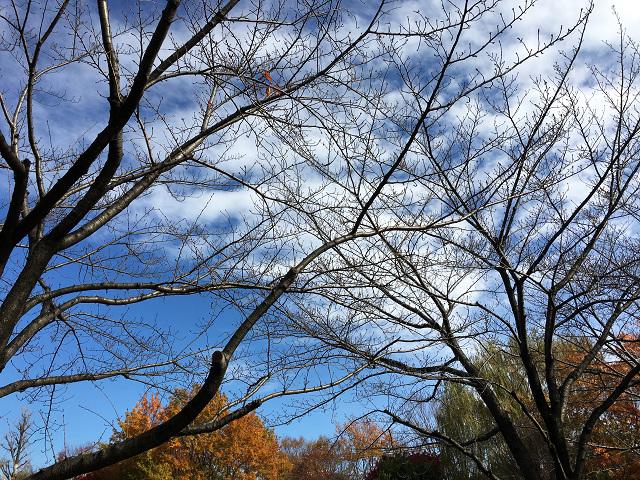 比較的暖かい日が続く11月末の東京2 by占いとか魔術とか所蔵画像