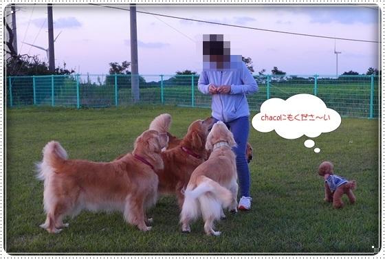 2017,10,1お散歩12