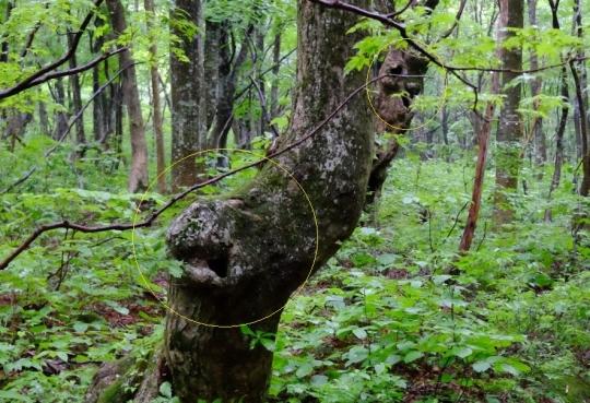 s-怨霊の木 (5)