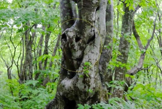 s-怨霊の木 (9)