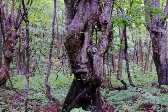 s-怨霊の木 (10)