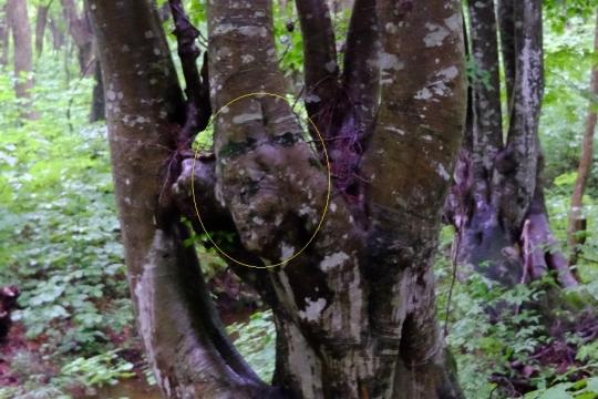 s-怨霊の木 (13)