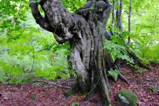 s-怨霊の木 (14)