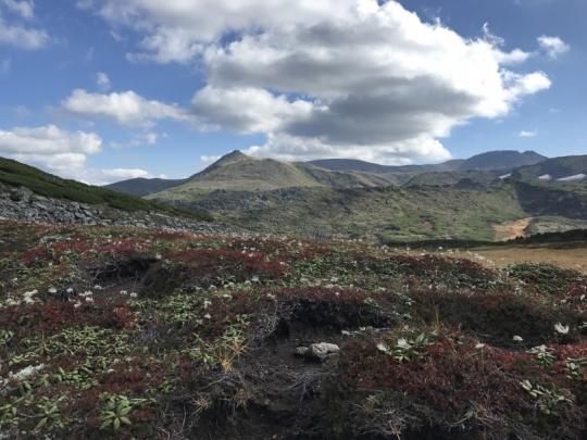 s-20170922黒岳2チングルマ