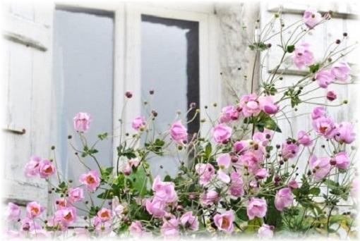 スグc誕生花