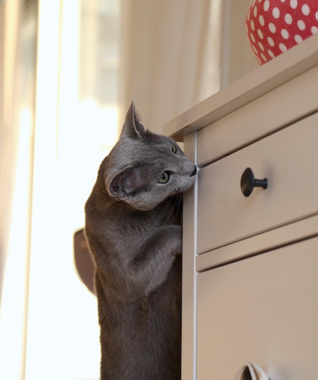 ここ、開けて!