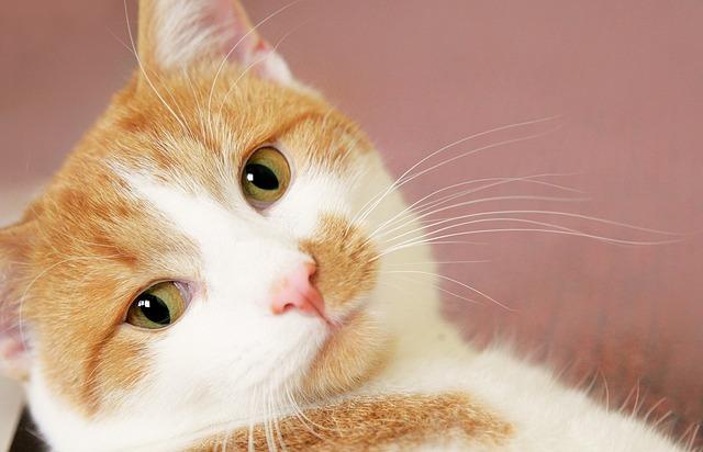 cat-2942887_640.jpg