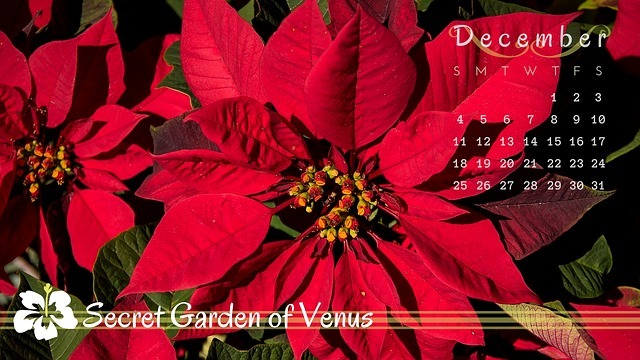 secret-garden-of-venus-1736444_640.jpg