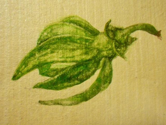 見たままに・緑花