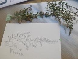 植物画・よもぎ