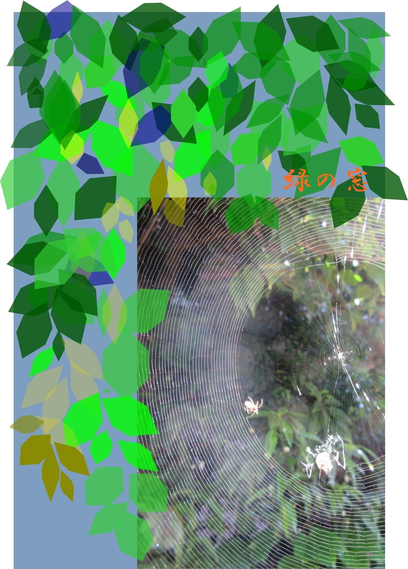蜘蛛の巣 みどりの窓 浅見さん