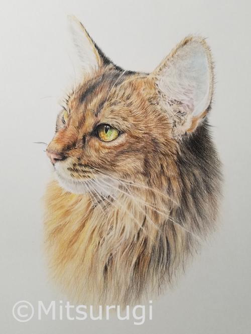 絵 イラスト ポートレート 肖像画 猫 2L