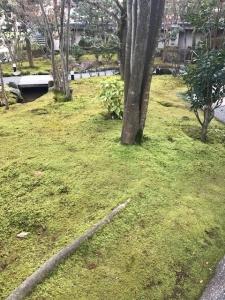 雪がない前庭♪